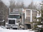 taxa-camioane